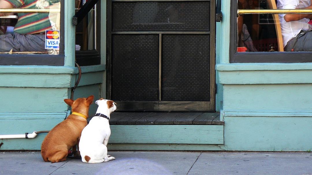 Nehmen Sie Ihren Hund da weg! – Hundekonflikte als Chancen