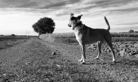 Wofür steht der Wunsch nach einem Hund?