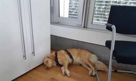 Crossover zwischen Menschentrainer und Hundetrainer