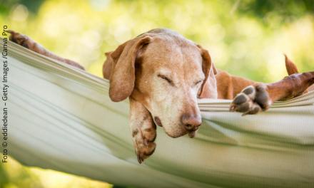 Mach mal Urlaub ohne Hund!